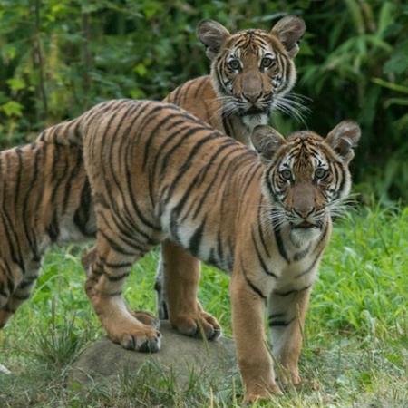 Julie Larsen Maher/Bronx Zoo